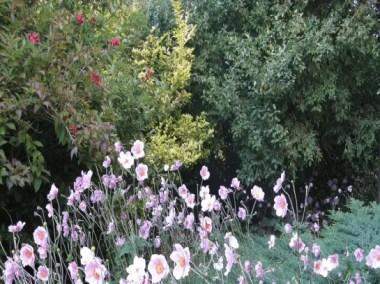 Photo Fleurs et arbres d'un jardin