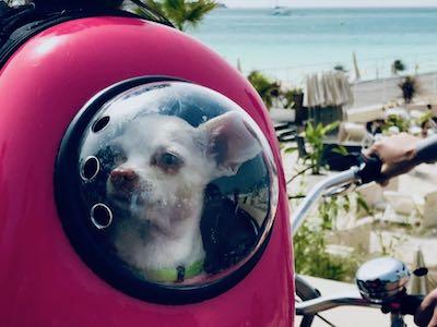 Spacedog - 1