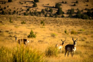 Driving around Rick's huge property yields many moments of wildlife, like these antelope.
