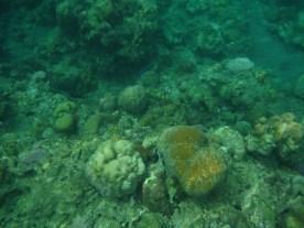 corals underneath