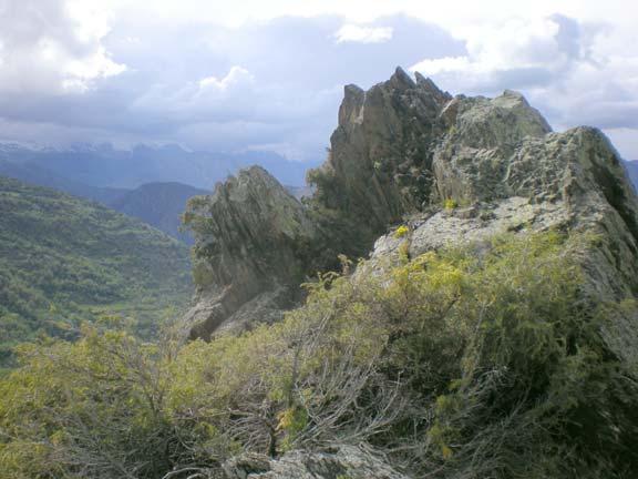 Rocky outcrop strewn with spring.