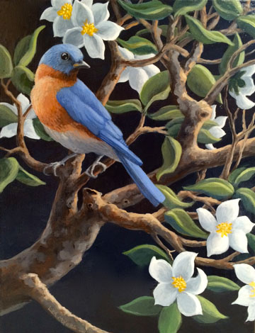 """Bluebird with Apple Blossoms acrylic on canvas, ©liza myers 14"""" x 11"""""""