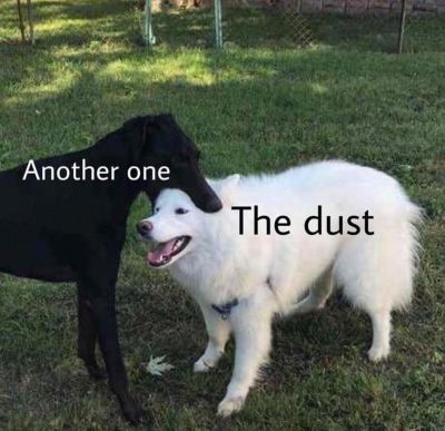 Perro-blanco-perro-negro-morder-another-one-bites-the-dust