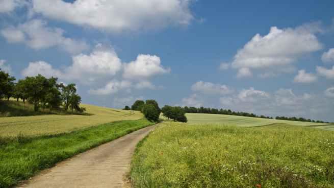 Camino-campo-arboles-verde-hierba-cielo-azul-nubes-anuncio