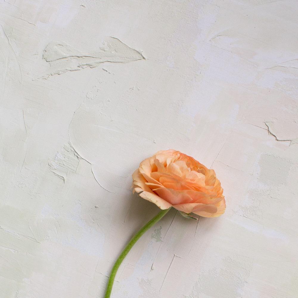 Wedding Bouquet Preservation | The Botanical Bouquet | Liz Baker