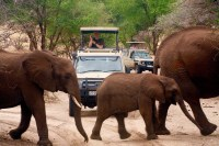 Tourists stop for a family of Elephants at the Tarangire Game drive in Tanzania, October 12, 2011. Photo by Liz Claus