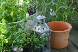 Wie Sie auf kleinem Raum Ihre eigenen Kräuter ernten können, Kräutergarten, Balkonkräuter, Gartenkräuter, herbals , edible herbals
