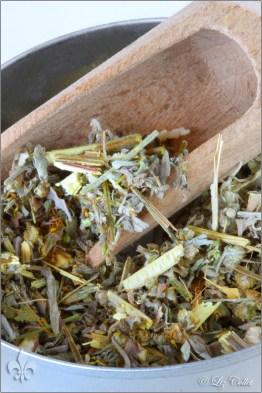 Wermutkraut,Artemisia absinthium