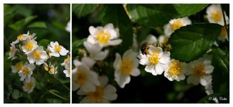 Bienenfleiss © Liz Collet