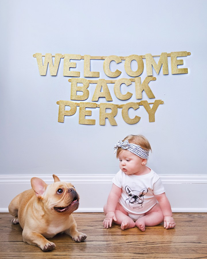 percy's board & train with canine connection!