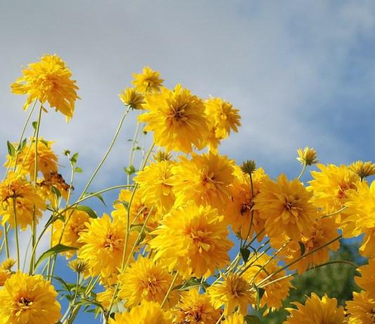 Life Will Blossom