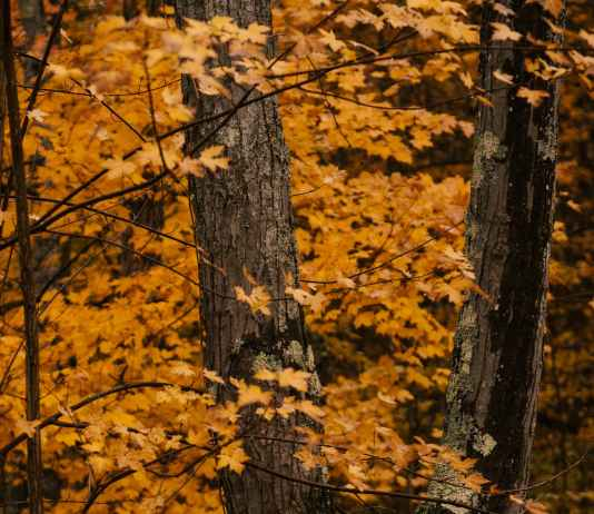 thick tree trunks among vibrant leaves