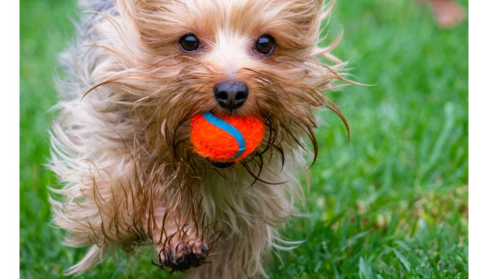 Local Love: Top 5 Best Dog Parks in Los Angeles