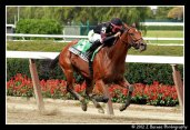Awesome Feather (FL) wins 10 for 10 in the Nasty Storm Stakes (Photo courtesy of John Barnes)