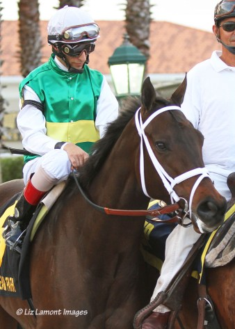 Dust and Diamonds (KY) with jockey John Velezquez