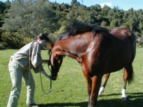 blue mist equine vet Postural Rehab