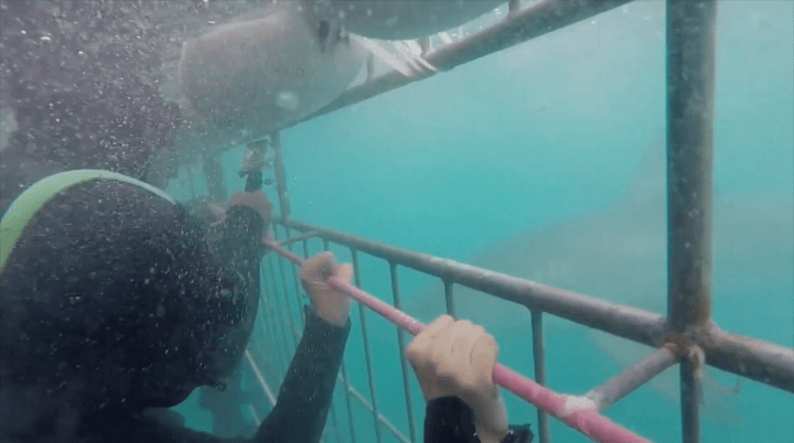 What I Learned From Diving With Great White Sharks