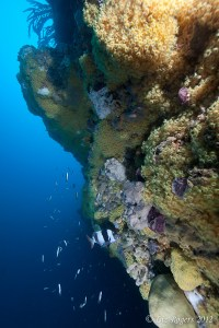 Magpie perch on Lonsdale Wall