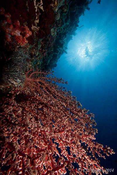 Sunballs underwater
