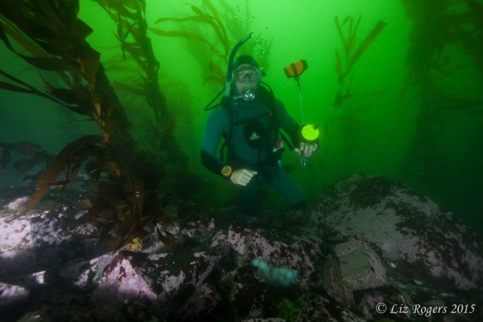 Kelp Forest in Lima