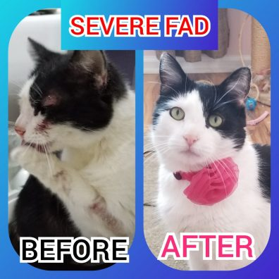 Before and after of black and white cat with FAD