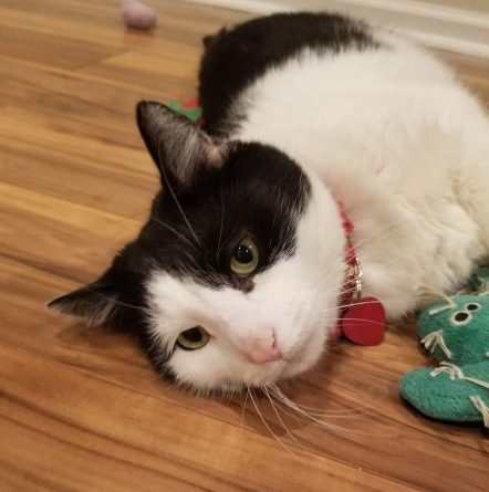 Black and white cat laying down