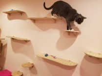 Cat walking on ContempoCat wall step