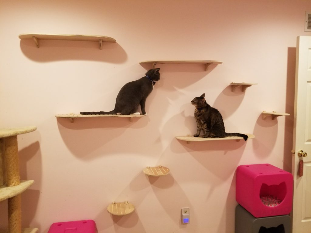 Cats sit on Contempo Cat wall steps.