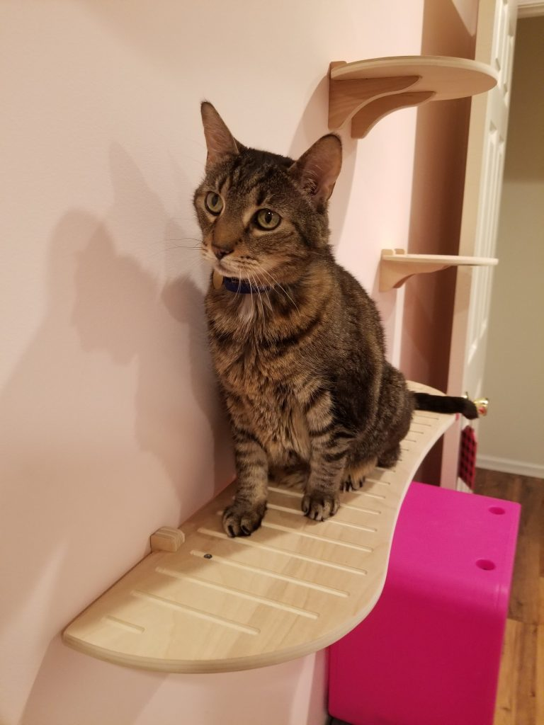 affordable cat shelves