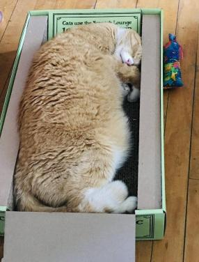 Cat sleeping on scratcher.