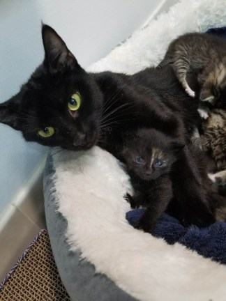 Mama cat with kittens.