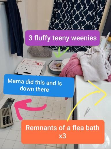 bathroom status