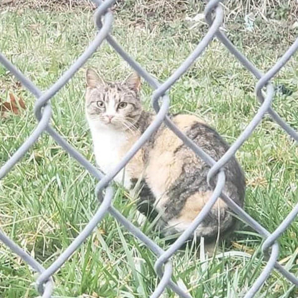 cat through fence