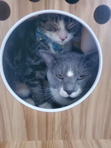 Two cats in cat tree