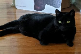 Black cat with green eyes sitting on light wood floor