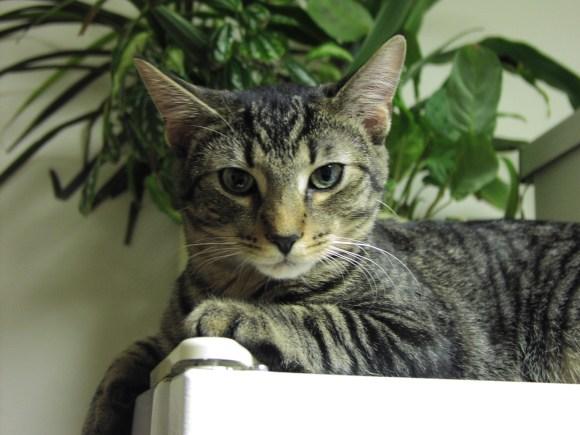 tabby kitten on fridge