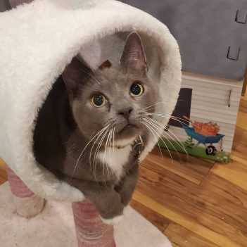 Gray cat in tower