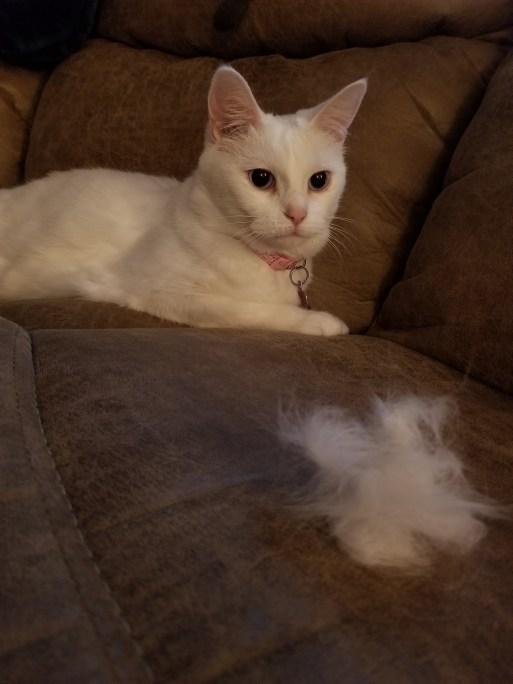 White cat brush