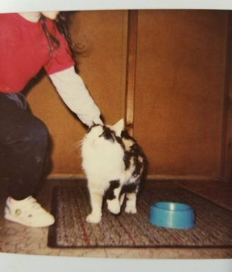Girl petting long-haired calico