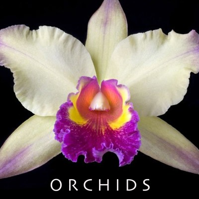 Orchids Interactive CD