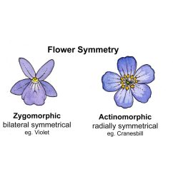 for more on flower symetry check out the blog from orbis environment  [ 1024 x 1022 Pixel ]