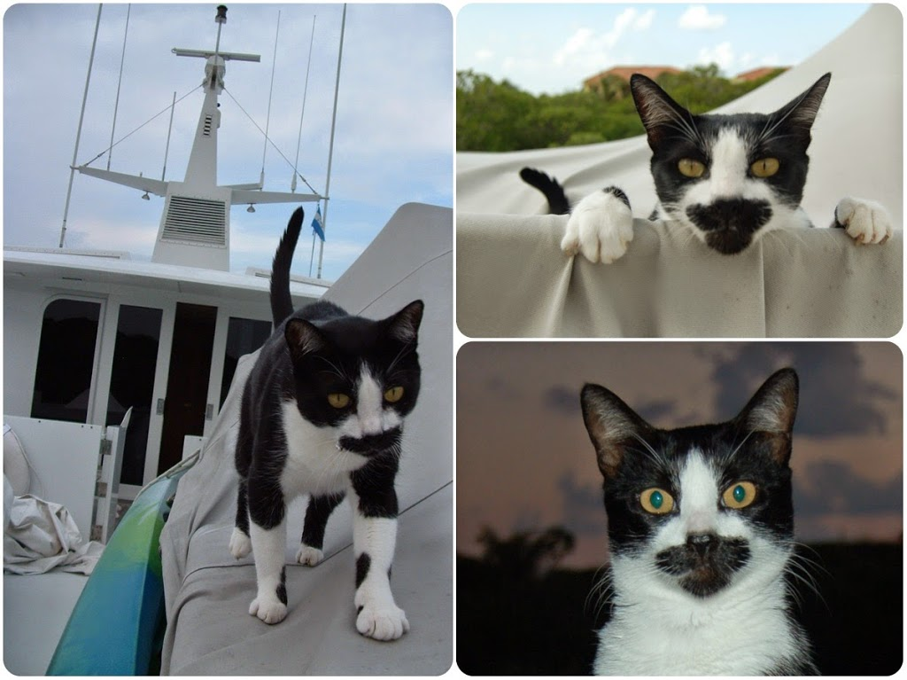 travel cat on the yacht in Roatan