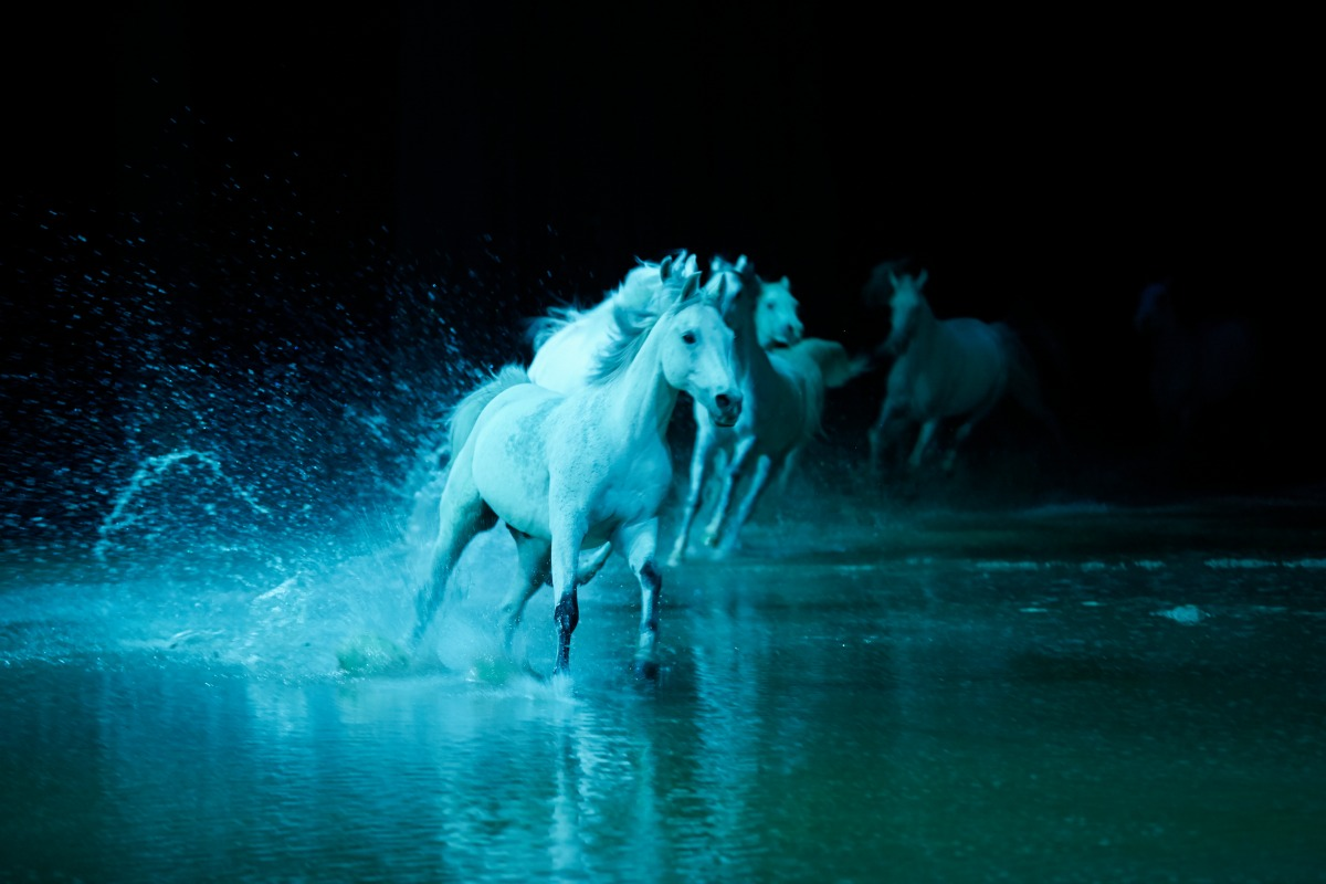 A Show You Don't Want To Miss - Odysseo by Cavalia