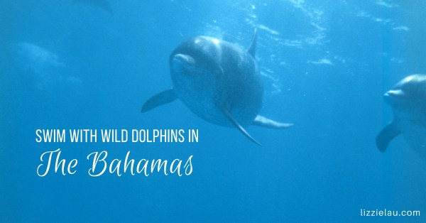 You Can Swim With Wild Spotted Dolphins in The Bahamas