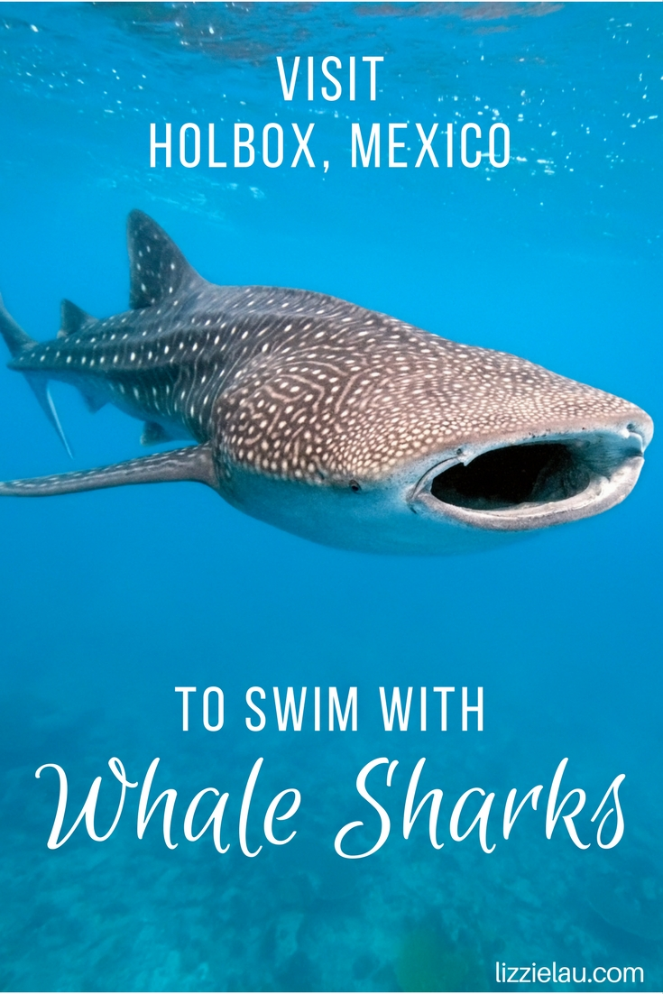 Visit Holbox Mexico to swim with whale sharks