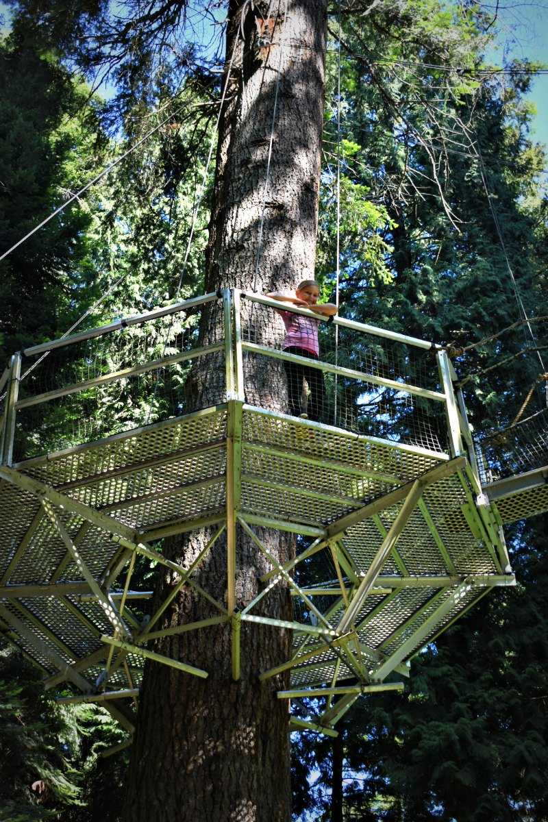 On your next trip to Vancouver visit the Greenheart Treewalk at UBC Botanical Garden