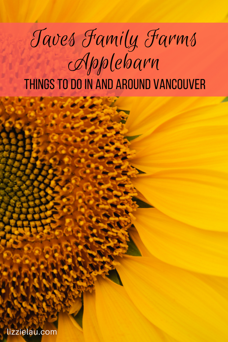 Take a hay ride into the newest attraction at Taves Family Farms Applebarn:  The Sunflower Patch! #travel #familytravel #sunflowers #Vancouver #Canada