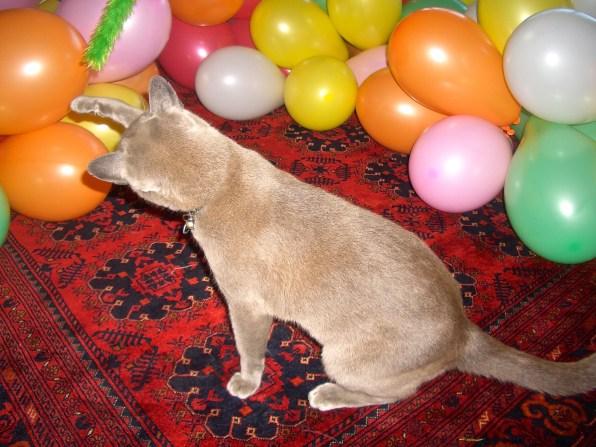 fun in the balloons