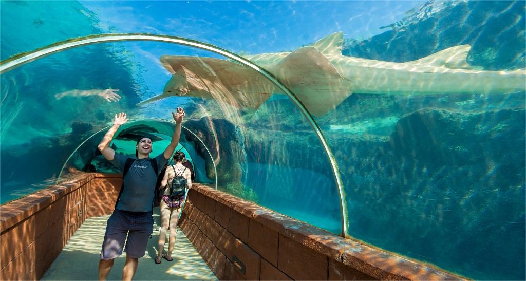 Sawtooth shark at Atlantis in the Bahamas. Aquarium photos by Lizzy Davis.