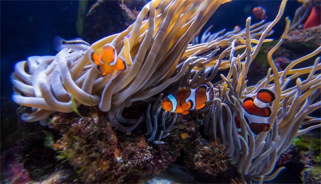 Nemo swimming around the Atlantis aquarium. Fish photos by Lizzy Davis.